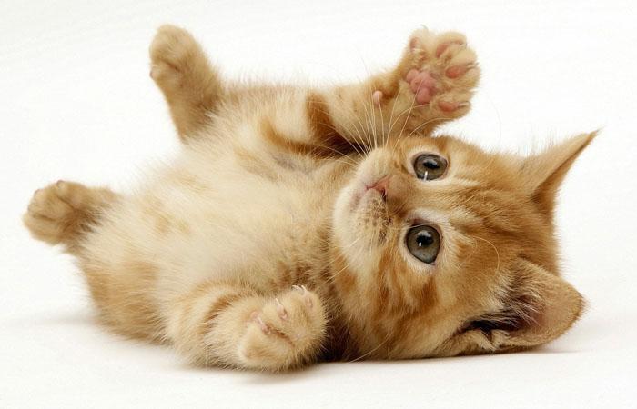 Советы по дрессировке котенка