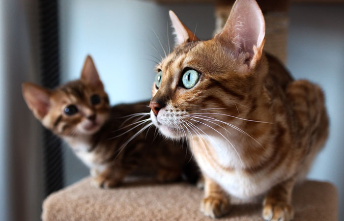 Основные команды для дрессировки кошки