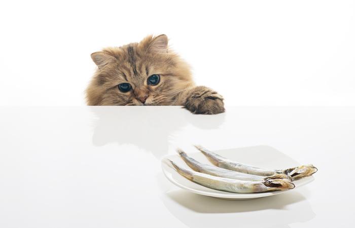 Кошкина добыча со стола