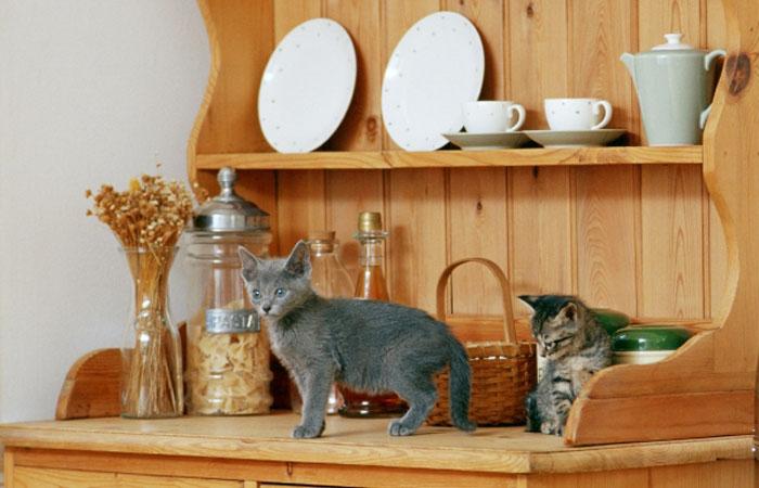 Рабочие методы отучить кошку не лезть на стол