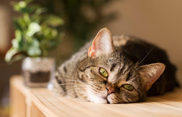 Проверенные советы от владельцев кошек