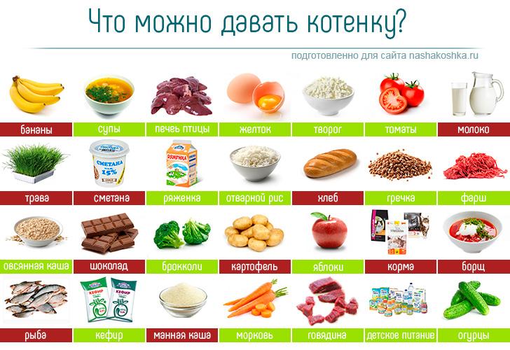 Таблица разрешенных продуктов для котенка