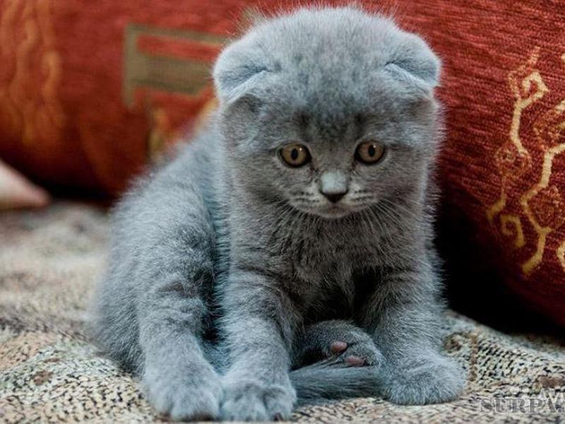 Чем кормить и как выбрать питание котенку?