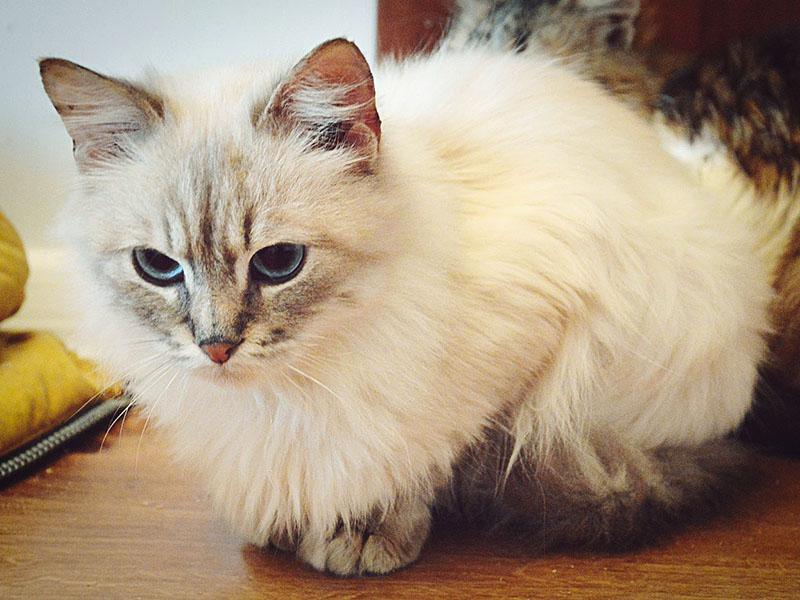 Невская кошка в раздумиях
