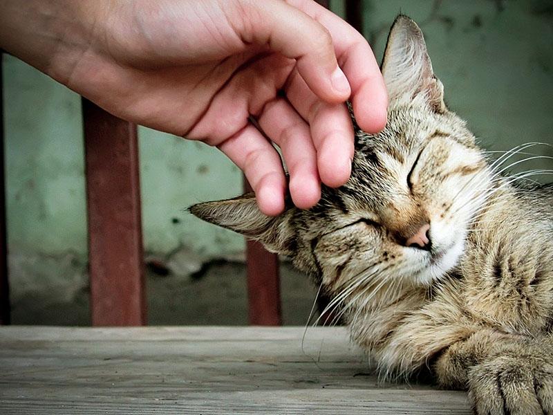 Для спокойных кошек выбирайте нежные имена