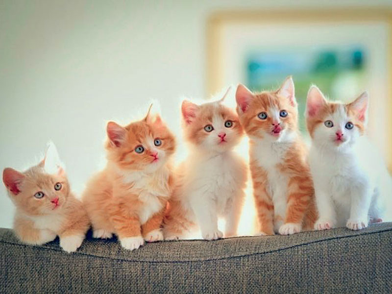 Какую кличку выбрать для кота?