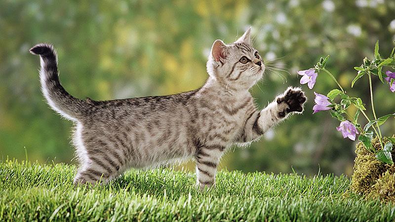 Любознательная кошка нюхает цветы