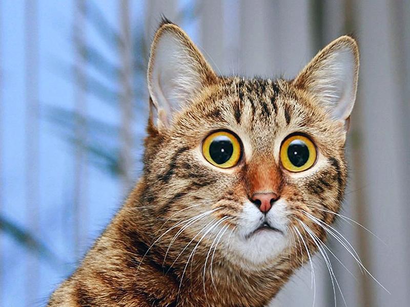 Коты очень недовольны что их лишают самого дорогого