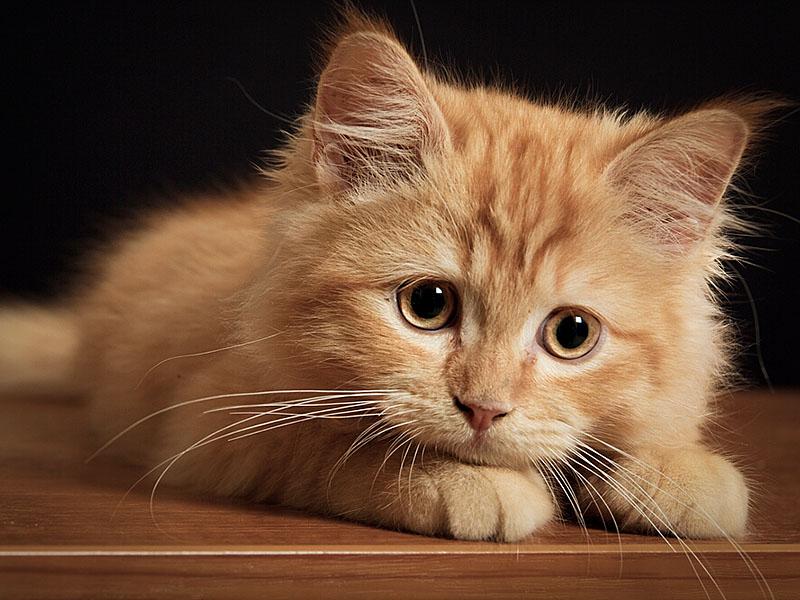 Котенку необходимо придумать кличку