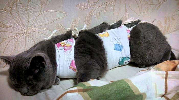 После стерилизации могут возникнуть проблемы у кошки