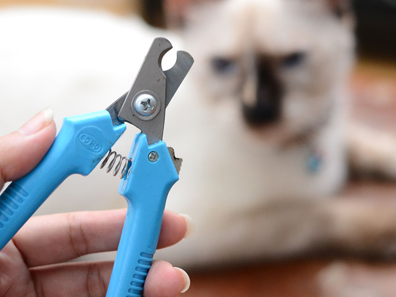 Подстригаем когти пушистому коту