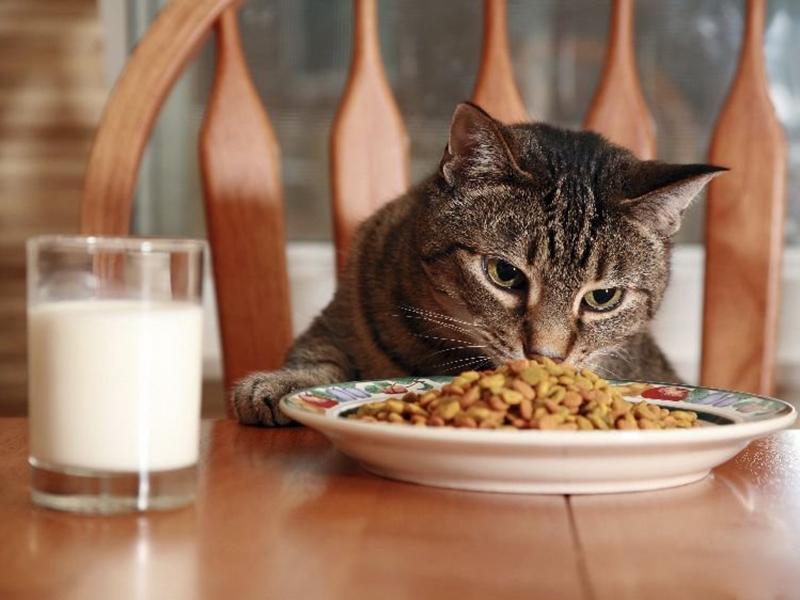 Правильная пища для кота после кастрации