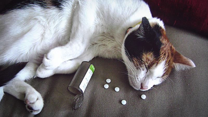 Чтобы кошка не отравилась прячьте таблетки в шкаф