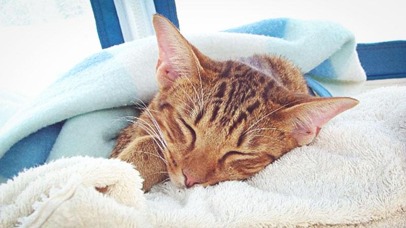 Способы вылечить кота от поноса в домашних условиях