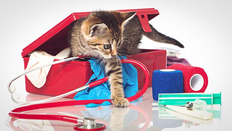 Окажите первую помощь кошке если у нее проблемы с приемом пищи