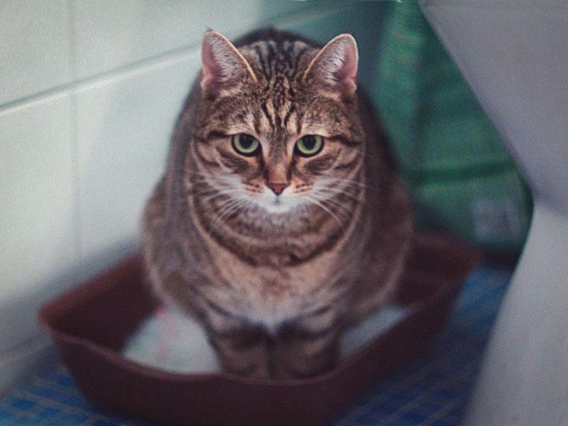Если у кота понос, чаще меняйте содержимое латка