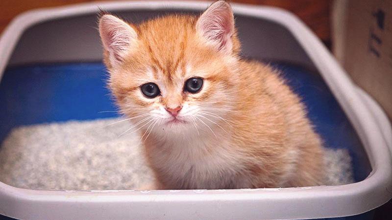 Что делать при расстройстве желудка у котенка?