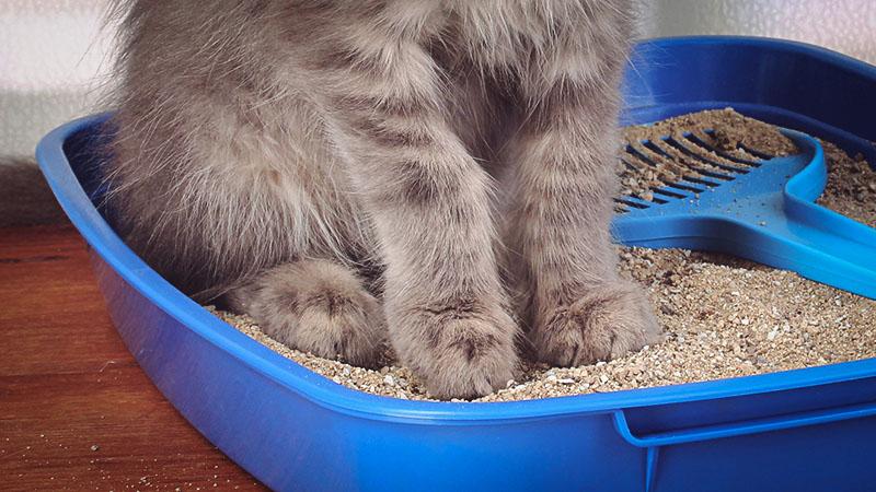 Для жидкого стула у кота используется специальный наполнитель