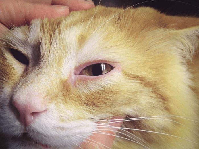 Если появились симптомы слезотачивости обратитесь к ветеринару