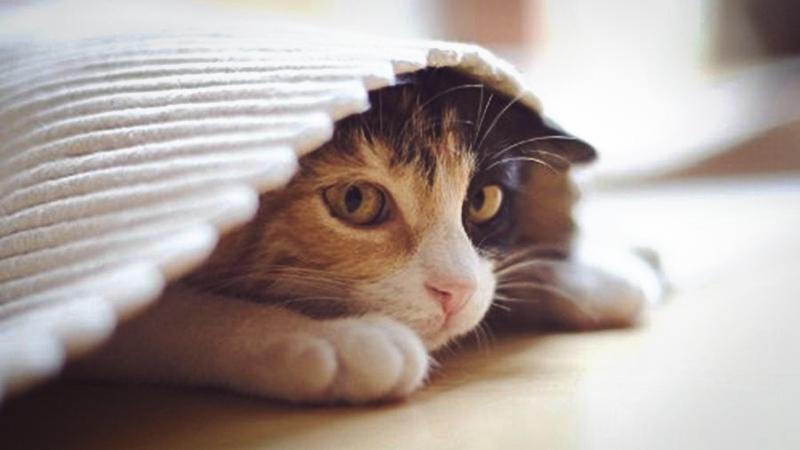 Из-за стреса кошка отказывается от еды и питья