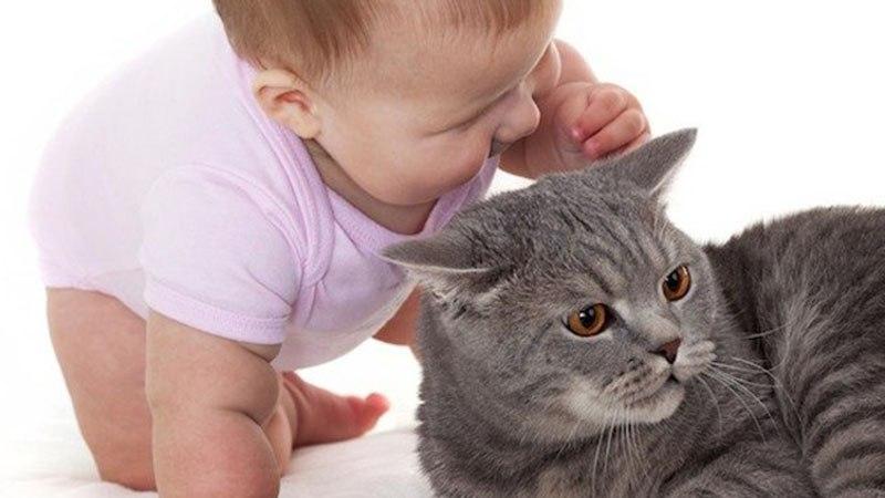 Аллергия на кошку у детей