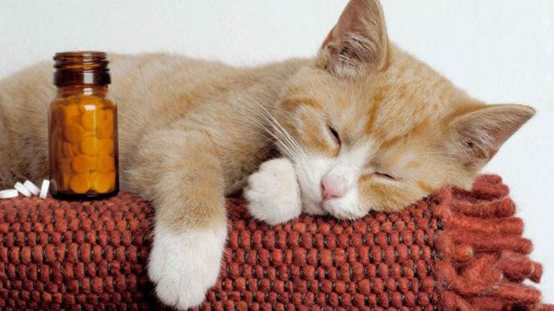 Таблетки от температуры для кошек