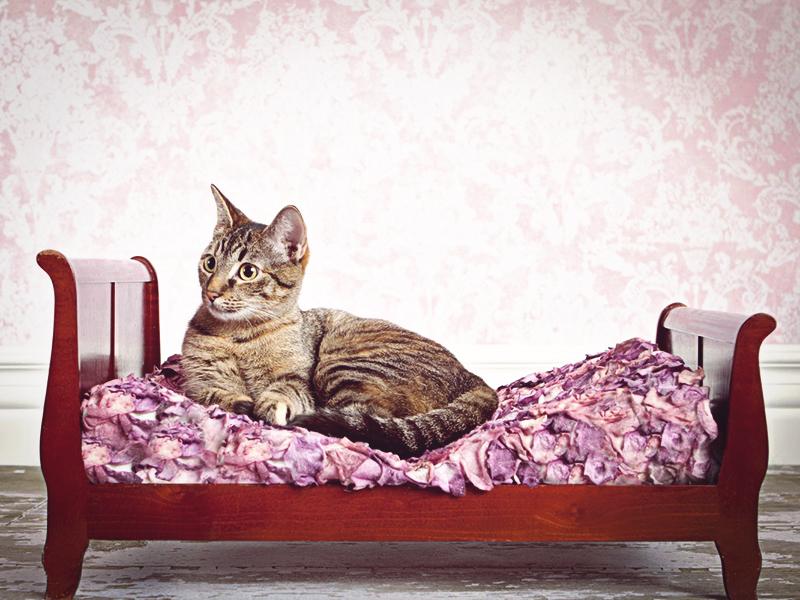 Чтобы кошка не гадила нужно чаще менять лоток
