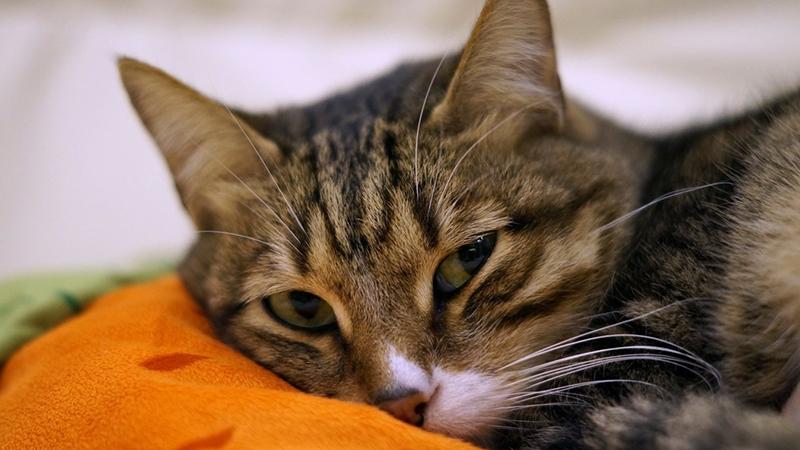 Уютное место для вашей кошки
