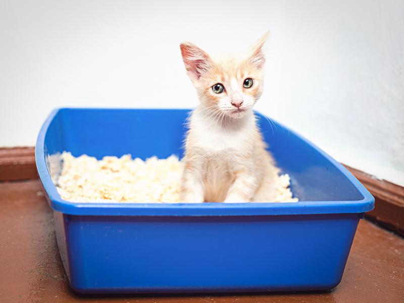 Кошке нужно менять лоток часто