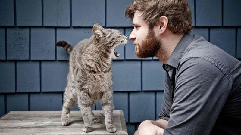 Может ли человек заразиться чумкой от кошки
