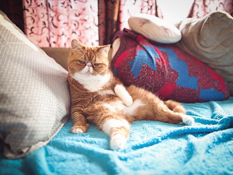 Причины, по которым кошка гадит