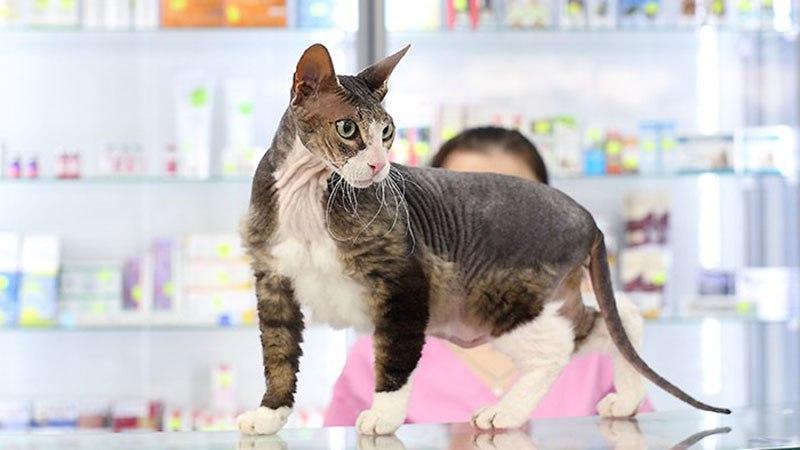 Кошка после вакцинации