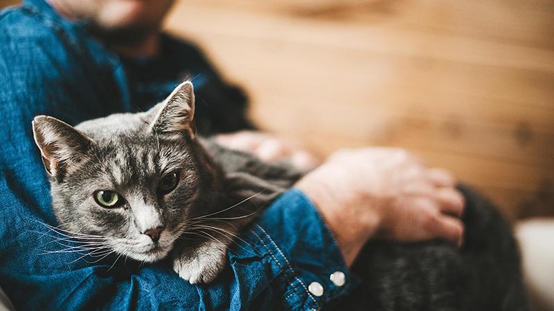 Кошки сильно привязываются к людям
