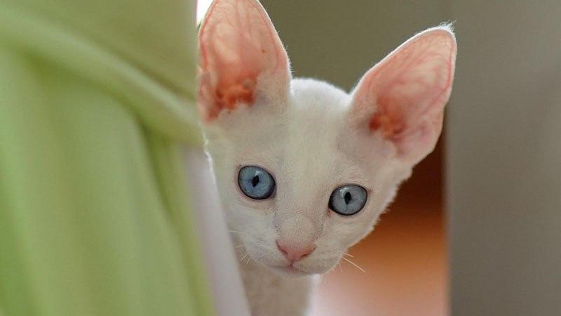 Профилактические меры - залог здоровья кошки