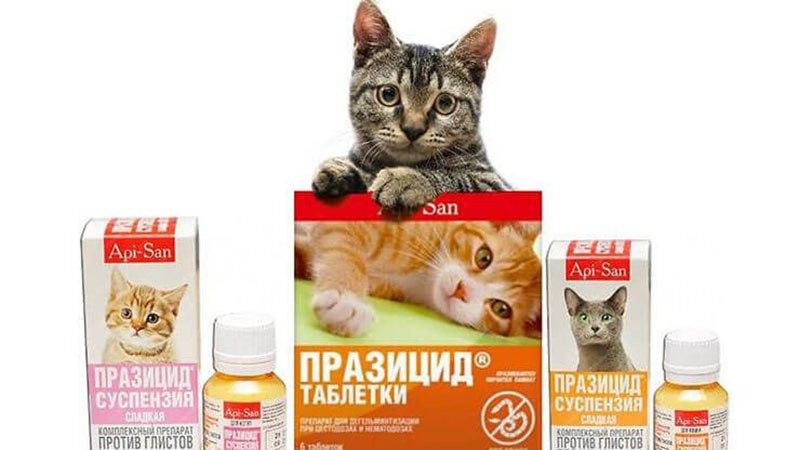 Какими препаратами можно лечить кошку от глистов
