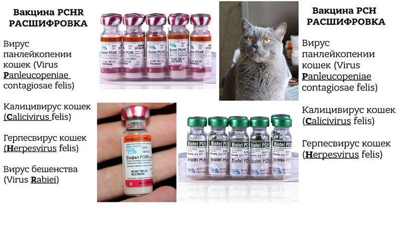 Виды вакцин для кошек