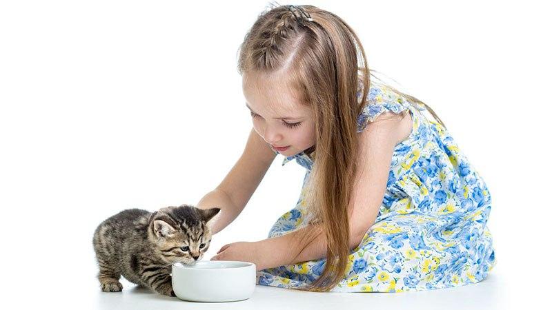Правильный рацион для кошек