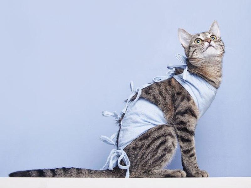 Стерилизация кошек должна происходить в специализированной клинике
