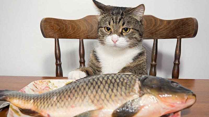 Почему кошкам нельзя давать часто рыбу
