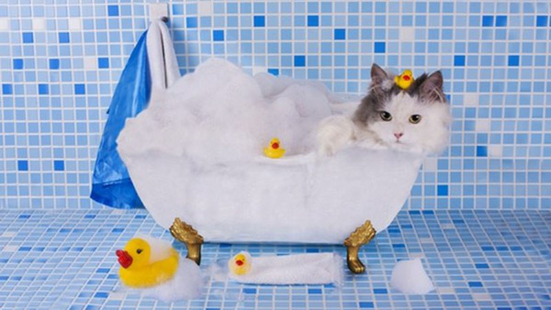 Как часто нужно купать кошек
