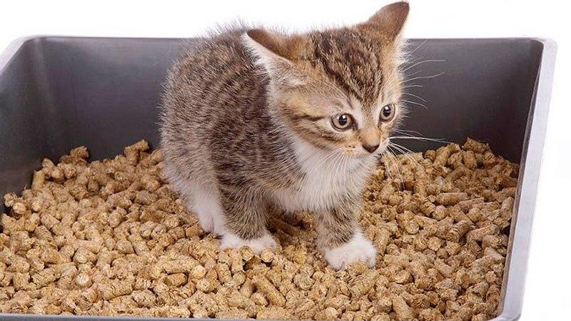 Лоток и наполнитель для котенка