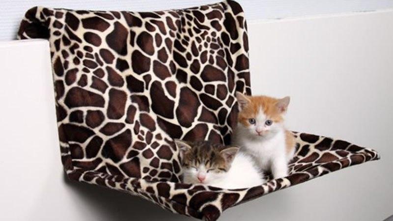 Уход за подрастающим котенком