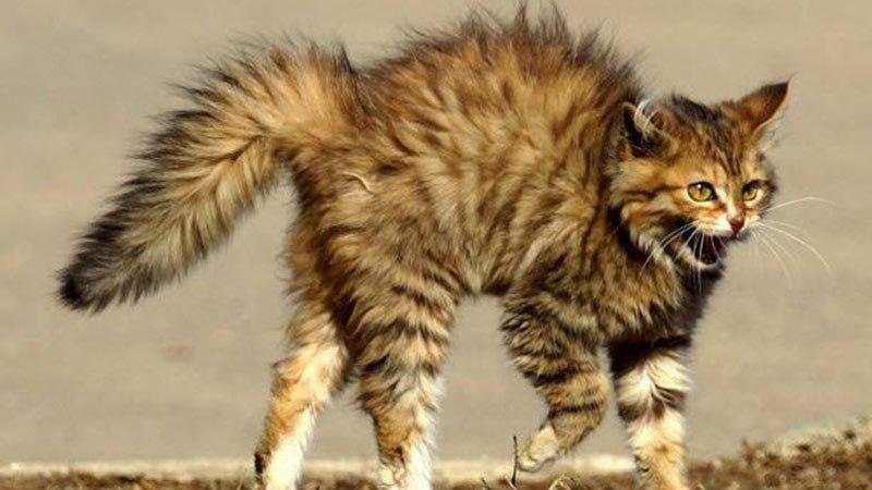 Кот становится агрессивным после валерьянки
