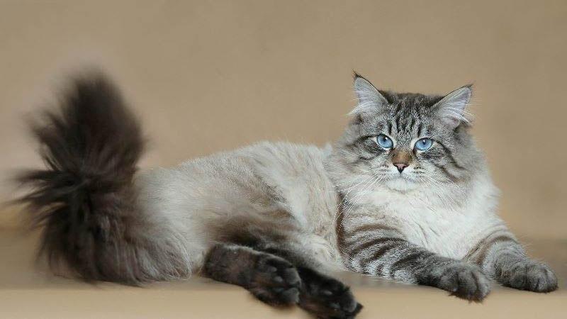 После стерилизации поведение кошки меняется в лучшую сторону