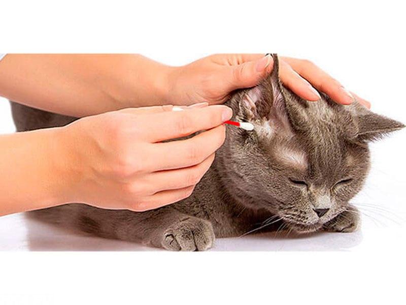 Чистим ушки кошки дома