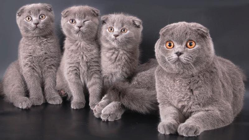 Что учитывать при выборе имени для котенка