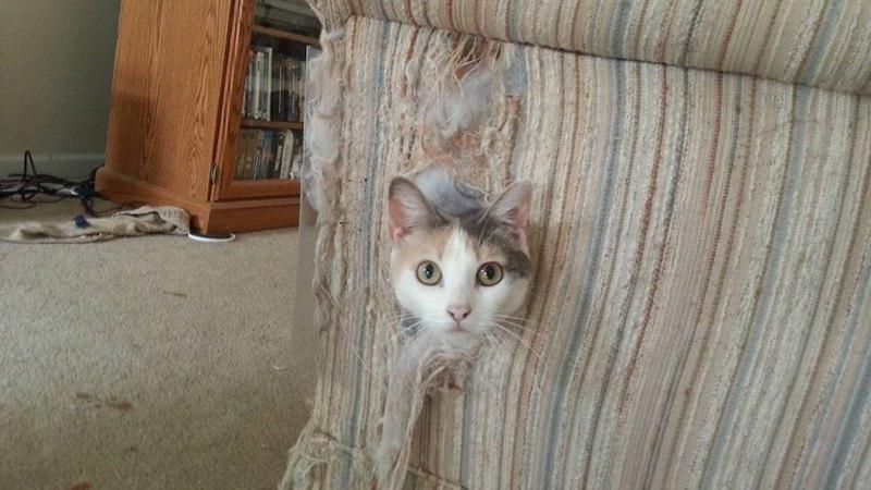 Почему кошки царапают мебель и другие поверхности в доме