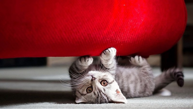 Как отучить кота точить когти об мебель