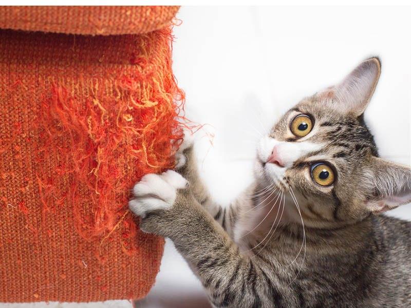 Кошка портит мебель - как отучить?