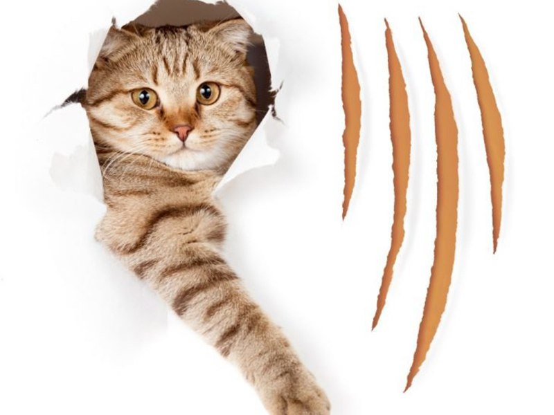 Отучиваем кошку рвать и царапать обои